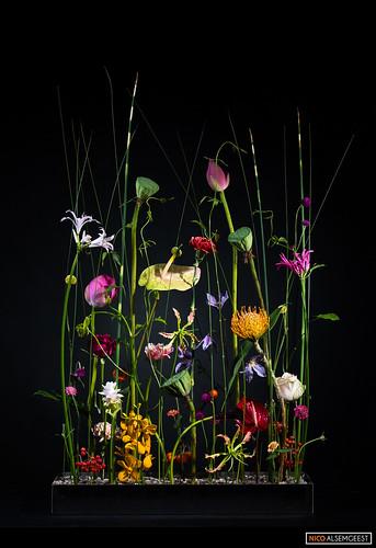 Design: Hanneke Frankema