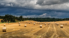 Seagulls & Storm Clouds & Bales & Bales of Hay (cindiefearnall) Tags: hayfield markdaleontario stormyweather stormclouds rural farm landscape hay clouds moody past bale landscapephotography gulls seagulls