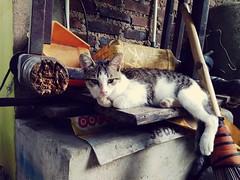#kucing #ucing #kitten #cat #chat #katze #ねこ #고양이 #貓 #felis #silvestris #catus #gato #γάτα #кошка #кот #mèo #miau #gatto #kitty #kat #katt #kissa #meow #macska #قط (haditahir) Tags: kissa kitten ucing macska gatto catus katze meow kitty γάτα ねこ kat silvestris mèo gato قط miau кошка katt kucing felis chat кот 貓 고양이 cat