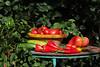 CKuchem-5545 (christine_kuchem) Tags: bauerngarten biogarten bioqualität ernte erntezeit fleischtomate garten gemüse gemüsegarten grün gurke nutzgarten paprika peperoni pflanze rarität sommer sorte sorten sortenvielfalt tomate vielfalt zucchini bio biologisch frisch gelb gesund lecker natürlich orange reif rot selten unbehandelt