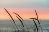 Newport, Oregon   ♤♡♢♧ ♡♢♧ ♢♧ ♧♢♡♤ ♤♡♢♧ ♡♢♧ ♢♧ ♧♢♡♤ #photography #landscape  #nature #Photograph #photo #photoshoot #captures #naturephotography #pics #pic #pix #landscapephotography #Photographer #photos #Photographers #Photographysouls #All_shots #photo (luziolopez) Tags: oregon pdxavsquad pacificnorthwest westcoastisbest nature hoodrivercrowd photographers sunsetphotography pink pnwtameless pnwdiscovered photograph sunsetphotos pdxart hoodriveroregon pnwisbest or nikonphotography pacific pdxartist newport upperleftcoast allshots picture hrcrowd photographylover photographs naturephotography captures landscapelovers pnwisbeautiful photoshoot wc pnwexplorations pacificocean photographyislife pictures ocean westcoastisthebestcoast landscape upperleftusa photography pics pnwisthebest photoshoots nikon naturelovers westcoastisbestcoast photographer pnwcollective pnw nikonartists pnwwonderland hoodriveror pdxphotographer pic pnwphotographer nikonusa photo pacificnw photographie sunsetphoto photos pnwonderland photographysouls sunset landscapephotography westcoast pix