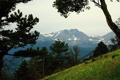 montane (capnadequate) Tags: rockymountainnationalpark rockymountains nationalpark park mountain nature colorado deermountain pine scenic landscape aspen meadow slope