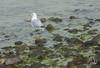 Chapin Beach-2017-00074-2 (uselessbay) Tags: 2017 beach chapinbeach dennis massachusetts nikon nikond700 places uselessbayphotography williamtalley williamtalleyjr d700 digital fullframe uselessbay usa