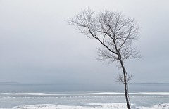 Solitary (steve colwill) Tags: trees instagram winter britannia