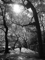 Walking in New York . Caminando en Nueva York (José X) Tags: newyork trees arboles art arte centralpark bw blackandwhite blancoynegro people gente usa walking caminando