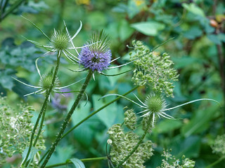 Le jardin sauvage - The wild garden