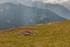 20170804 Switzerland 07219 -1 (R H Kamen) Tags: swissalps switzerland valdebagnes valaiscanton verbier alpine flower mountain nature rhkamen scenics summer valais