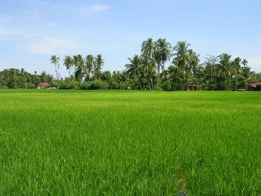 The Worlds Most Recently Posted Photos Of Pemandangan And Sawah