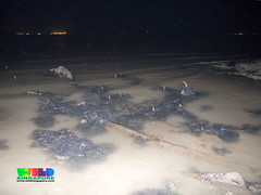 Pipes left on the shore after coastal works (wildsingapore) Tags: changi carpark1 threats coastal works singapore marine intertidal shore seashore marinelife nature wildlife underwater wildsingapore