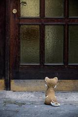 locked out (WolfiWolf-presents-WolfiWolf) Tags: wolfiwolf wolfi eneamaemü wolf door outside alone würzburg