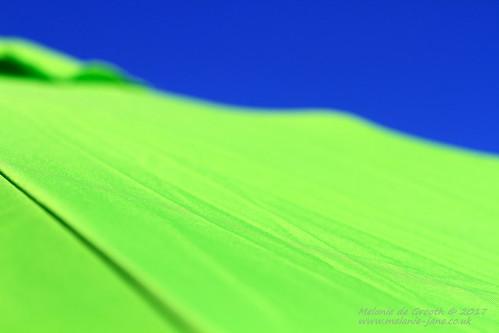Green Umbrella 2