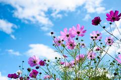 _DSC2505 (catfish.boogie) Tags: nikond750 tamronsp35mmf18divcusd japan hokkaido sapporo flower