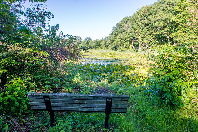 Little Calumet Headwaters Nature Preserve - July 25, 2017