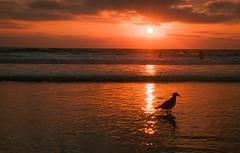 San Diego Mission Beach (tobyron) Tags: sandiego missionbeach sunset pacific
