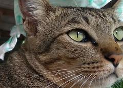 crop-1-cat