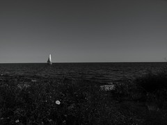 Solitude.                                   P7244610 2 (Thank U All for over 2,500,000 views LOVE !) Tags: lakeontario torontocenterisland canada summer isbe contrast sailingboat sky flickr apple water waves flowers blackandwhite