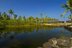 Pu'uhonua O Honaunau National Historical Park (Matt Champlin) Tags: hawaii usa history historical beach paradise tropical ocean water sea idyllic bigisland canon 2017 peaceful puuhonuaohonaunaunationalhistoricalpark palm palmtrees fishponds royal