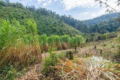 trekking chiang mai - thailande 34