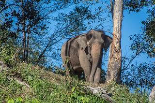 trekking chiang mai - thailande 14