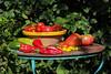 CKuchem-5569 (christine_kuchem) Tags: bauerngarten biogarten bioqualität ernte erntezeit fleischtomate garten gemüse gemüsegarten grün gurke nutzgarten paprika peperoni pflanze rarität sommer sorte sorten sortenvielfalt tomate vielfalt zucchini bio biologisch frisch gelb gesund lecker natürlich orange reif rot selten unbehandelt
