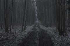 wandering (Mindaugas Buivydas) Tags: lietuva lithuania color winter december forest tree trees mood moody dark darkness twilight snow sadnature kintųmiškas kintaiforest mindaugasbuivydas snowstorm winterblue