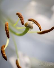 The Heart Of Flower (Salphotoworld) Tags: flower macro garden seeds