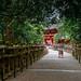 Stone Lanterns lead to The Kasuga Shrine, Nara, Japan