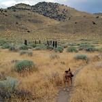 Bella at Hidden Valley Regional Park thumbnail