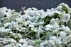 in a winter garden (Yenner815) Tags: belgium belgia flanders flandria zwevezele garden