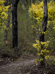 """golden path • <a style=""""font-size:0.8em;"""" href=""""http://www.flickr.com/photos/44919156@N00/36768034060/"""" target=""""_blank"""">View on Flickr</a>"""