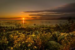 Glow (Žèę Ķ) Tags: dusk landscape ocean outdoor rocks sea seascape stones terranova yellow bc canada richmond river sunset water clouds sunstar evening sundown afterglow goldenhour reflection wildflowers