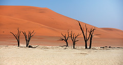 namibia 2017 (mauriziopeddis) Tags: africa namibia sossusvlei deadvlei dune dunes sunset red three sand sabbia landscape