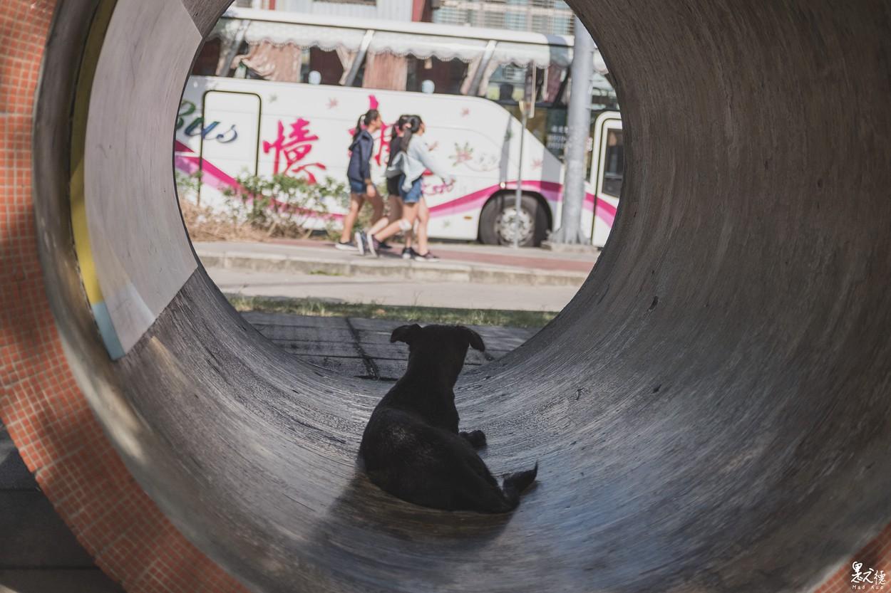 桃園街拍-桃園街頭攝影