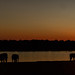 Another Luangwa sunset...