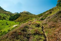 Col de Pause (Ariège) (PierreG_09) Tags: ariège pyrénées pirineos couserans seix pause coldepause valier montvalier pathscaminhos montagne flor flore