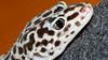 DSC_3601 (MaurizioBerti75) Tags: geko leopardino rettile lucertola leopard reptile macchie