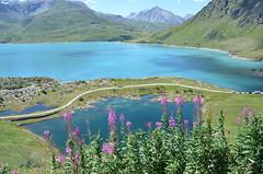 Lac du Mont-Cenis (RarOiseau) Tags: lac bleu blue fleur eu savoie lanslebourgmontcenis montagne saariysqualitypictures coldumontcenis v3000