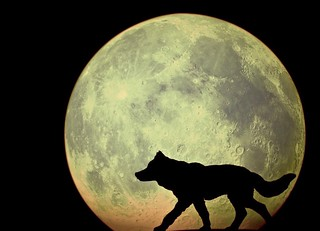 The wolf and the moon...