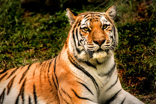 Alert Tiger 3-0 F LR 9-16-17 J524