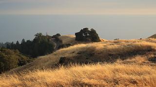 Late Afternoon on Mount Tamalpais