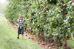 Green Apple, Daydream (DaveLawler) Tags: apple orchard greenapple daydream child boy kid trees applepicking food fruit massachusetts d500