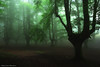 Fairy forest (Hector Prada) Tags: bosque niebla atmósfera árbol mist misterioso oscuro naturaleza hayedo encantado forest fog mood creepy tree enchanted scary charmed dark fairy nature hojas leaves paísvasco basquecountry