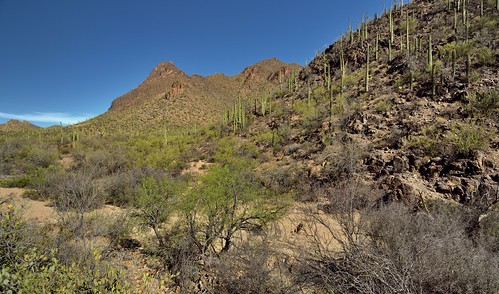 A Roadside Stop Along the Tucson Mountains