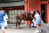 Sumiyoshi Matsuri, Osaka (jtabn99) Tags: horse shrine sumiyoshitaisha osaka japan nippon nihon festival matsuri 20170801 大阪 日本 住吉大社 住吉祭 夏祭 馬 神馬