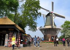 Amsterdam-May'17 (74) (Silvia Inacio) Tags: amsterdam amesterdão holanda holland thenetherlands tree árvore mill moinho keukenhof lisse garden jardim park parque
