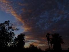 Evening Clouds (Scott Douglas Worldwide) Tags: az arizona awesome america amature american atlasta adorable awsome antique sky s sunrays smiling sun sunset sunrise seagull keeper k lakewobegon lake pink perfect p peaceful paradise palmtree palm palms palmtress pretty