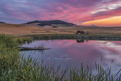 Rural Sunset II (NikonDigifan) Tags: palouse steptoebutte idaho reflection sunset tractor agriculture rural farming wheat pond niksoftware nikon28300 nikond750 mikegassphotography
