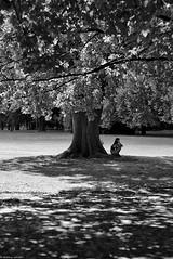 La faune & la flore (Mathieu HENON) Tags: leica m240 50mm voigtlander nokton noirblanc blackwhite monochrome hongrie budapest parc île marguerite margitsziget