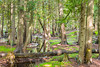 cedar grove (dajonas) Tags: wisconsin doorcounty peninsulastatepark cedars summer august fishcreek