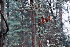 Stanley Park (Zara Calista) Tags: trees woods forest nature outdoors grey sage branches nikon orange leave teal